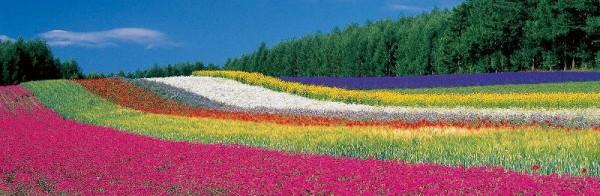北海道撮影ツアー,オオタケカメラ