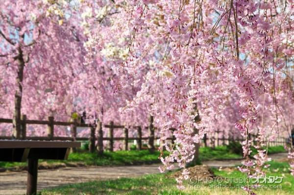 春のフォトコンテスト オオタケカメラ