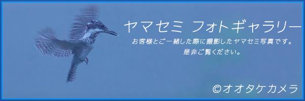 ヤマセミ撮影 オオタケカメラ