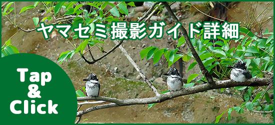 ヤマセミ撮影ガイド