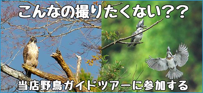 野鳥撮影テクニック