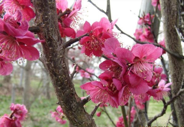 2017春のフォトコンテスト オオタケカメラ
